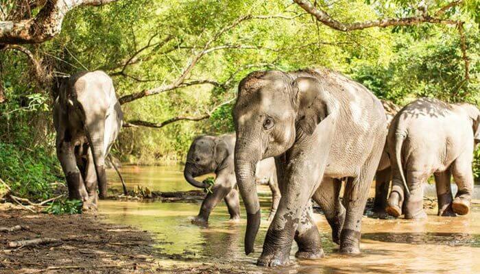 Phuket Elephant Sanctuary Phuket
