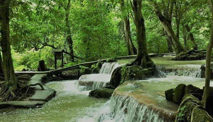 Ao Luk Mangrove Forest Krabi