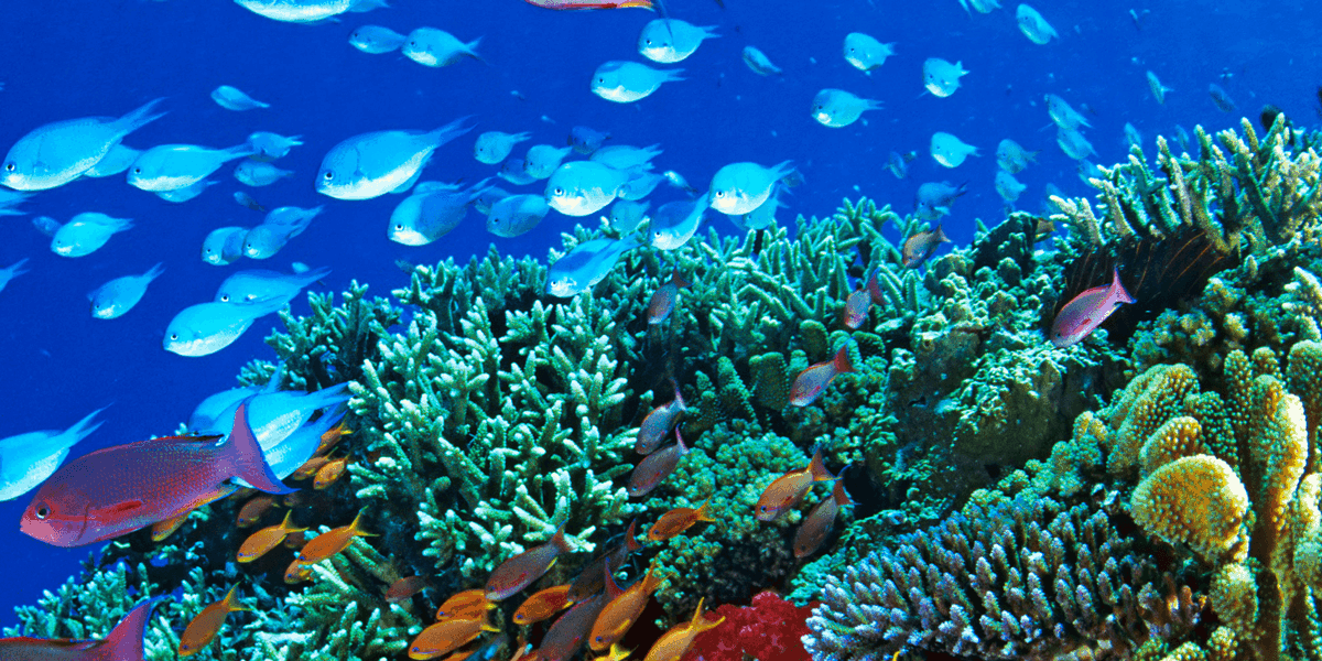 The Best Time to Visit Great Barrier Reef